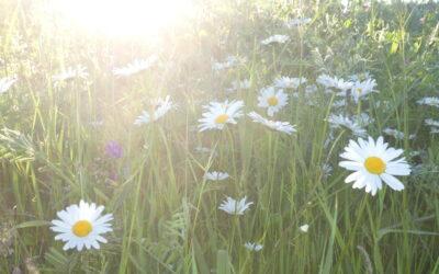 Zinnige Zondag – yoga in de natuur